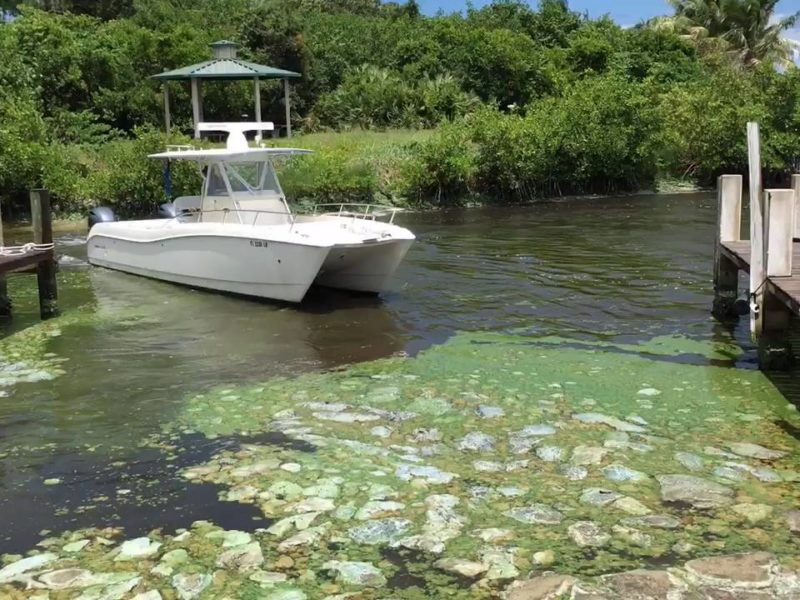 Drylet's technology selected to remediate algae infestation in Florida